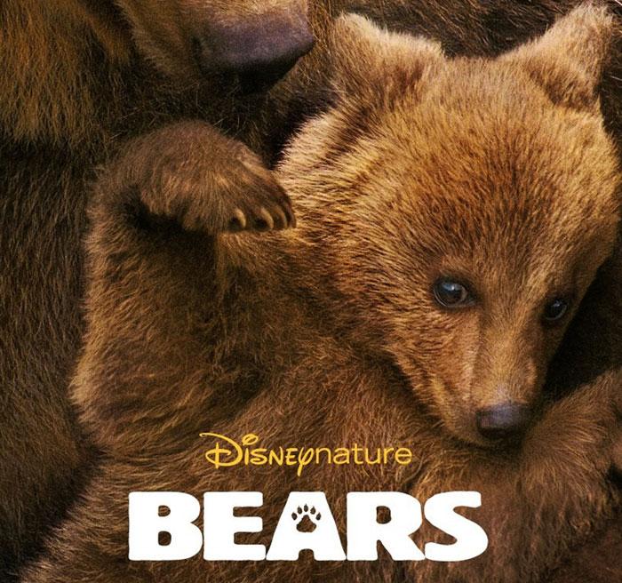 Bears-square