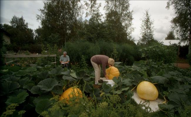 Garden-Lovers-650-4