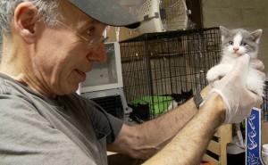 Cat Rescuers 650