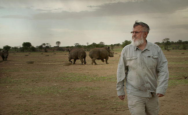 Buffalo Dream Ranch, North West Province, South Africa - November 2016: John Hume, the worlds largest rhino breeder walks among his Rhinos. Mr. Hume had invested more than 50 Million US dollars into his rhino project. He currently is the custodian of over 1500 Rhinos, and fears that without legalization in the trade of Rhino Horn his project will come to an end.