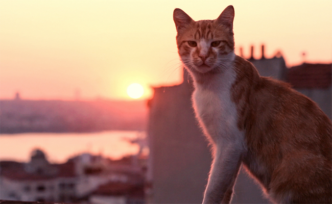 'KEDI': Saturday, January 6, 6pm