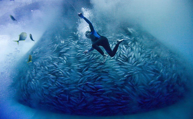 Air, Land + Sea Screening: 'BLUE'